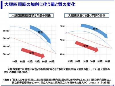 日本人の年齢・性別による大腿四頭筋の筋肉量と質の違いが明らかに!(国立長寿医療研究センター、東海国立大学機構名古屋大学)